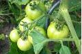 Brantford Farmers Market - Fresh Products